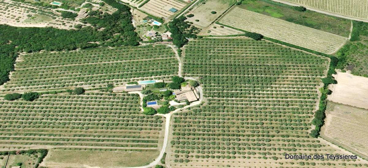 locations ventoux huile d'olive bio