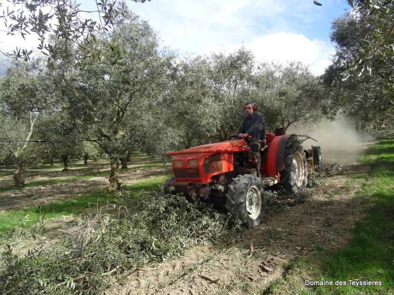 broyage du bois de taille d'olivier