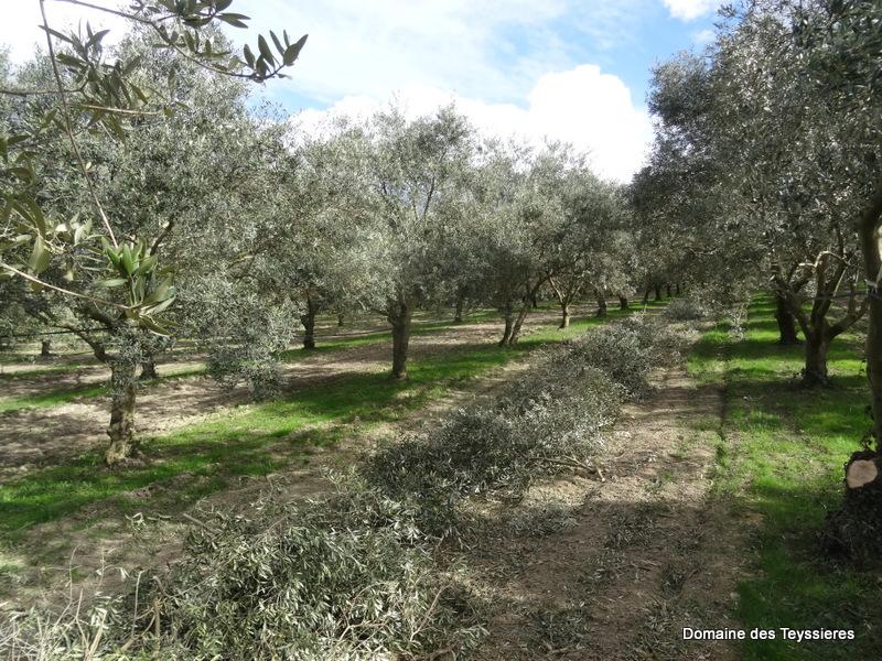 bois de taille d'olivier