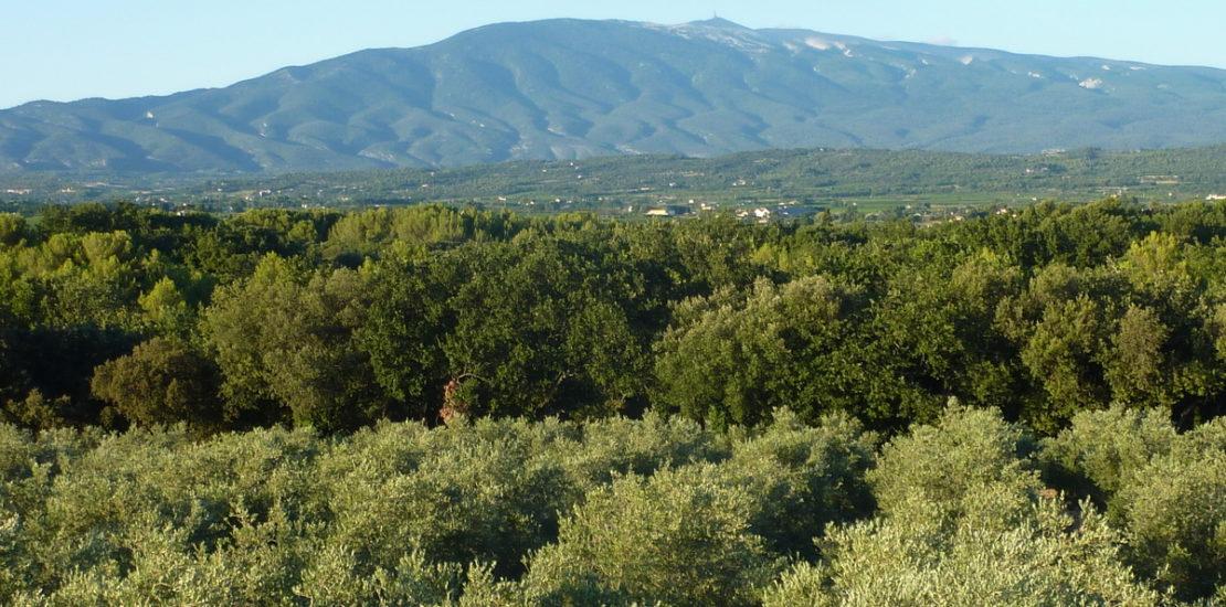 Vue sur le domaine et le Mont Ventoux